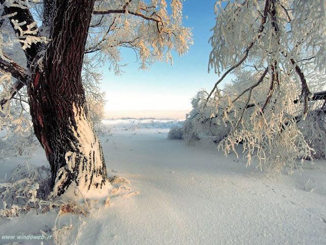 Neve.jpg (1024×768)