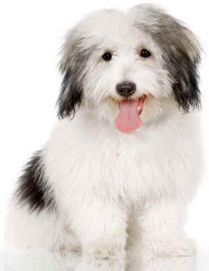 Blog - Breeds Of Small Dogs : Best Small Dog Breeds