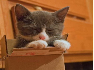 The cat is above all things a dramatist.--Margaret Benson