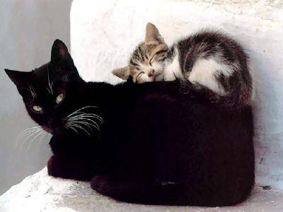 black cat and a kitten