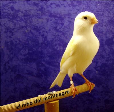 http://1.bp.blogspot.com/_w8es5fUjvPo/SN_m0nzxLiI/AAAAAAAAABg/P4t-WIFd_A0/s400/amarillo+mos.+2.jpg