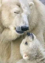 Polar mother and cub