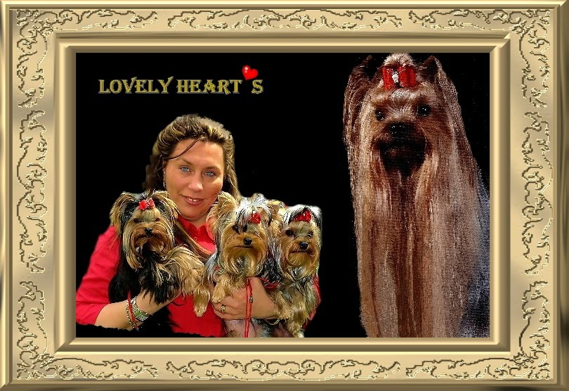 Lovely Heart´s Yorkshire Terrier News