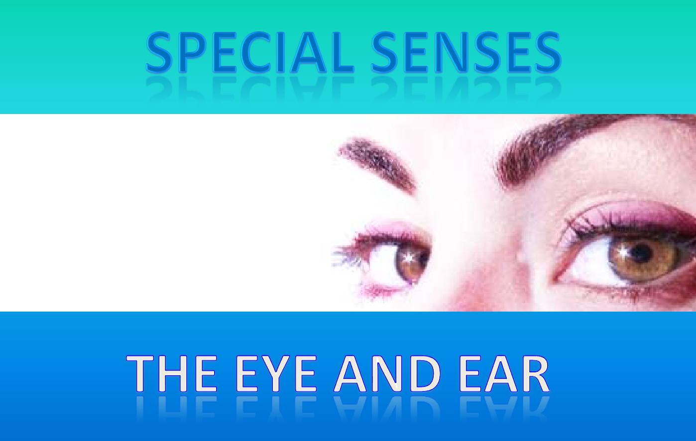 special senses Pdf | there is substantial involvement of purinergic signalling in the physiology of the special senses and this will be considered in the eye,.