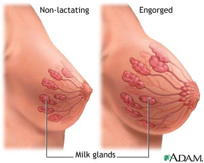 Your idea How much larger breasts pregnancy scandal!