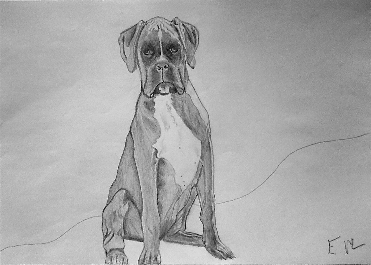 Manunews ayons du chien - Boxer chien dessin ...