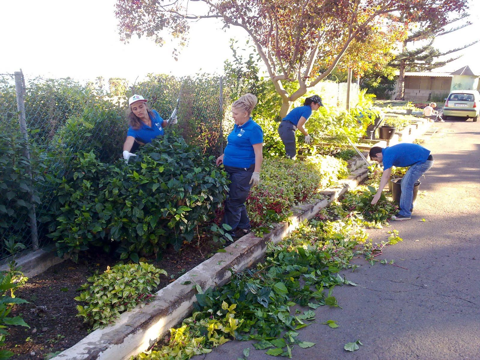 curso auxiliar jardineria viveros