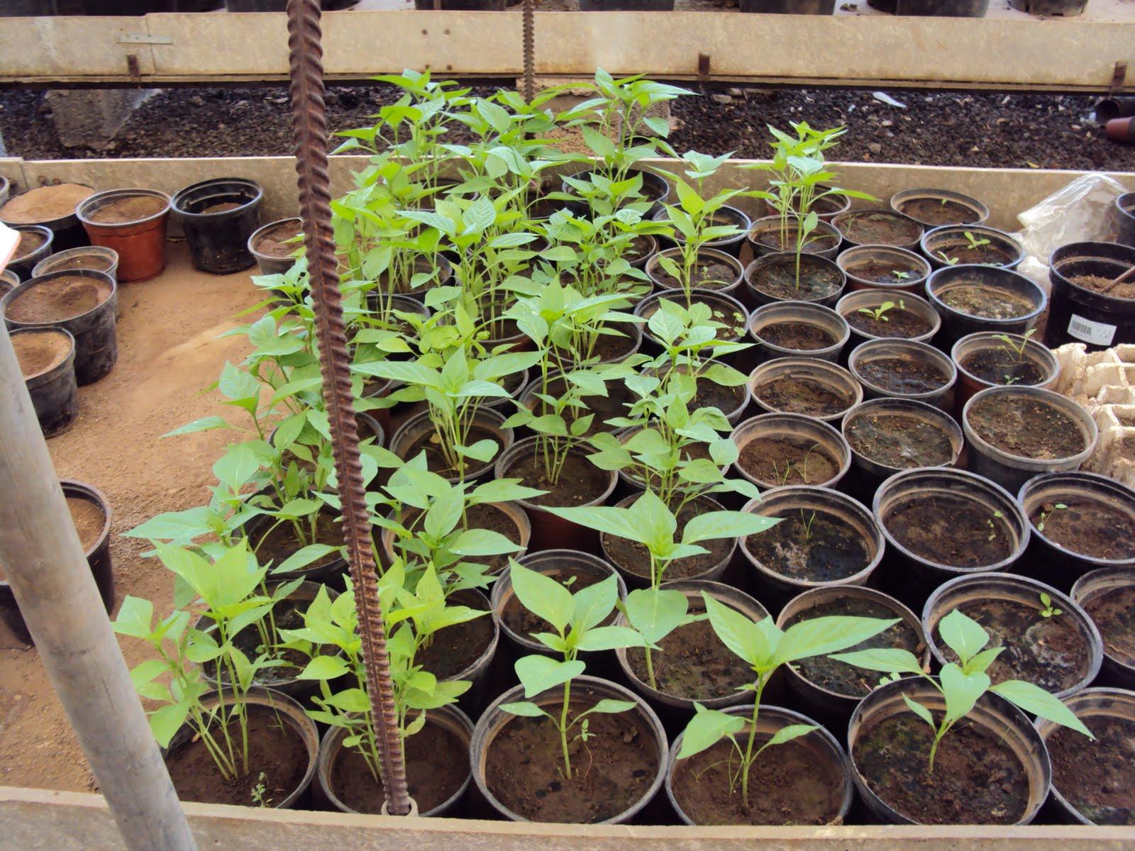 Curso auxiliar jardineria viveros revisi n y for Auxiliar jardineria