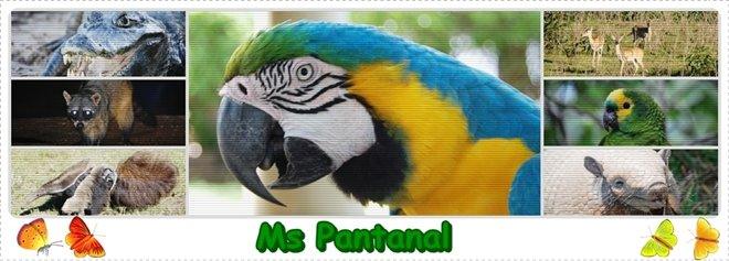 MS Pantanal
