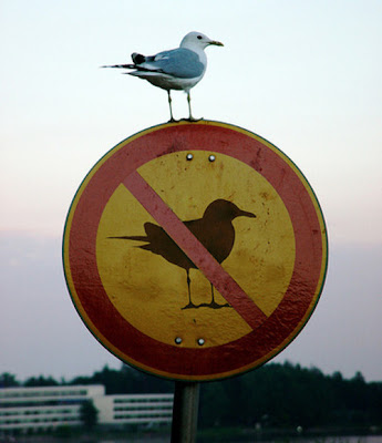 Seagull on a sign