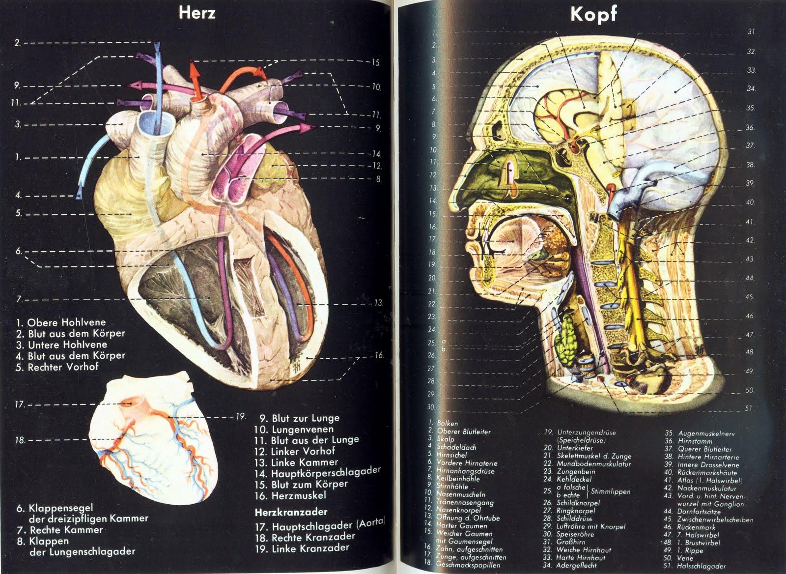 Erfreut Kapitel 9 Anatomie Und Physiologie Arbeitsmappe Antworten ...