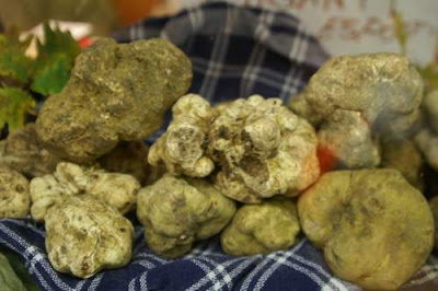 image of white truffles in Alba
