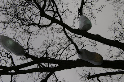 Image of white cocoons in the trees in the English Garden on the banks of Lake Geneva in Geneva, Switzerland.