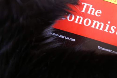 Image of your Hero, Pommes, on top of The Economist, May 30th to June 5th, 2009, edition. Close-up.