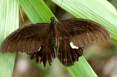 Image of a slightly battered butterfly