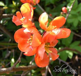 Ich Hoffe Euch Hat Mein Kleiner Ausflug Gefallen? Seitdem Ich Auf Knien  Durch Den Garten Gerobbt Bin, Mir Jede Blume Jede Pflanze Genau Angeschaut  Hab, ...