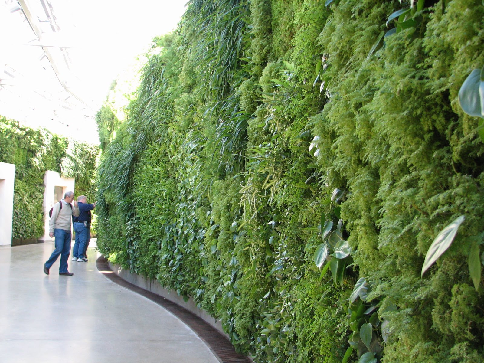 Video wall on pinterest vertical gardens green walls Green walls vertical planting systems