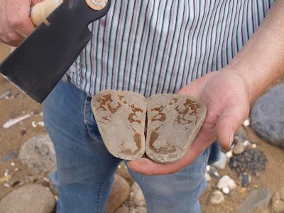 at finde fossilerpa fur srligt.