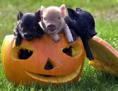 Poke pigs pocket pigs voltagebd Choice Image