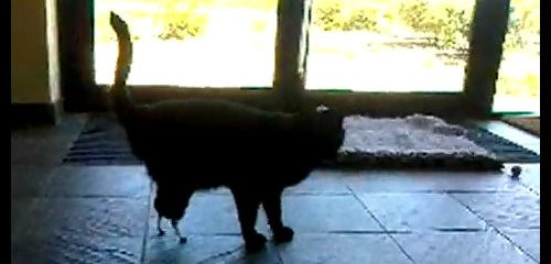 2010 06 01 archive in addition Jersey Island Uk moreover Freaky Implants And Transplants also Oscar Bionic Cat Pioneering Surgery Gave TWO False Legs besides Missy Cat Gets Worlds Feline Knee Replacement. on oscar bionic cat pioneering surgery