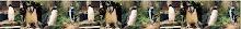 Sobre pingüinos en el mundo