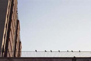 Unos pajaritos de descanso en la Barceloneta. Hice la foto en julio de 2006