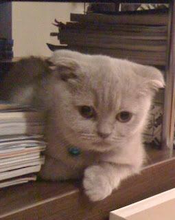 Kedi tuvaleti kapalıdır. Olmadığı gibi tatsız kokular