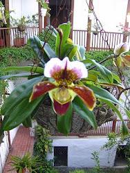 Las flores de mi Tierra