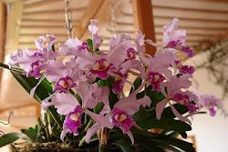 Nuestras Orquídeas