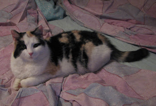 kissaneiti Elli