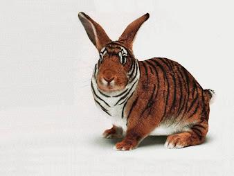 #9 Rabbit Wallpaper