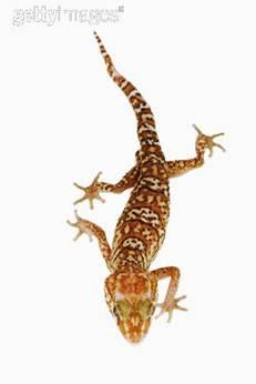 Já pensou em escalar paredes como uma lagartixa?