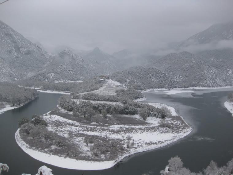 Pujol nevat (Coll de Nargó, 30.11.2010)