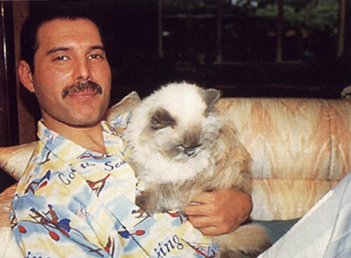 Freddie Mercury - Wikipedia, the free.
