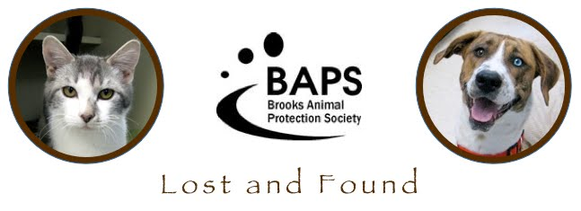 Brooks - Lost and Found Pets