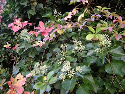 Jacquetta Menzies Garden Design