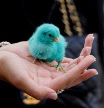 ♥ Tweet Tweet ♥