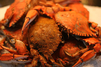 International Recipe Syndicate: Maryland Steamed Blue Crab Recipe