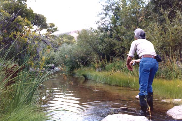 Fisherdad beaver dam creek the early years for Beaver creek fly fishing
