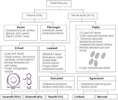 Jurnal koagulasi darah