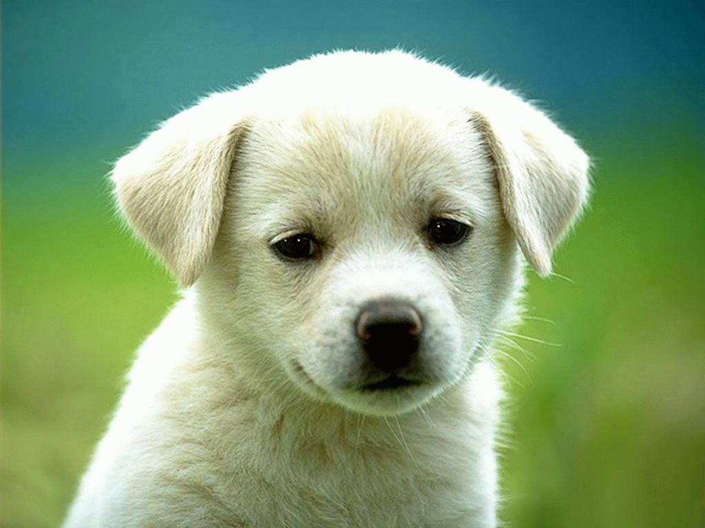 http://1.bp.blogspot.com/_wQQgCzPtvpg/SwpCgeHPjpI/AAAAAAAAAAM/1bt2nYg9oYY/s1600-R/animal_101.jpg