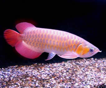 Ikan Laga: July 2008