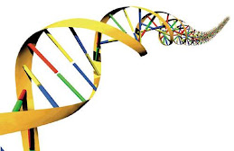 The Mysteri of DNA