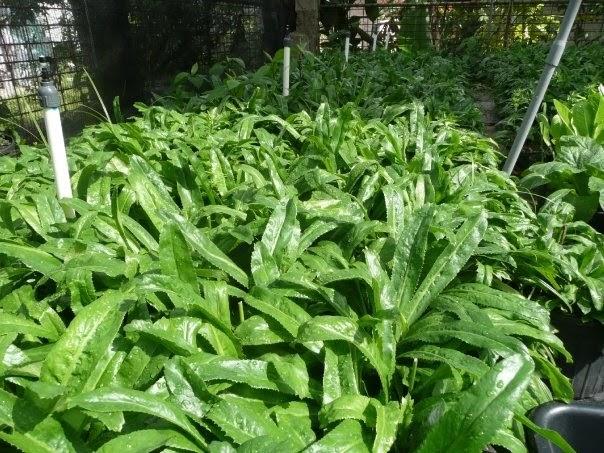 Vivero paola recao con materia organica for Vivero organico