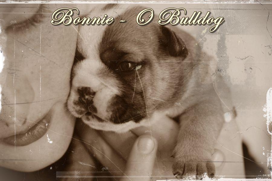 Bonnie - O Bulldog