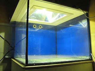 Plafoniere Acquario Fai Da Te : La vita di una vasca: illuminazione acquario con plafoniera fai da te