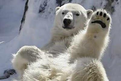 Les ours ont essayé avant leur hibernation d'hiver