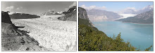 Muir Glacier Vanishes in 63 Years From August 1941 to August 2004