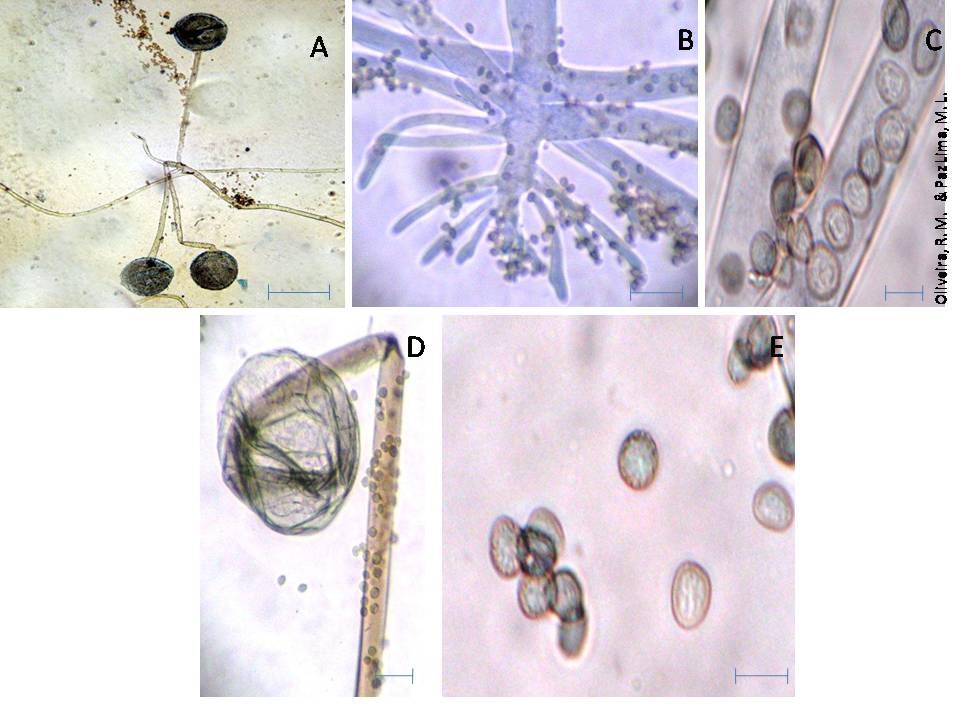 Como é correto para tratar um fungo de pregos