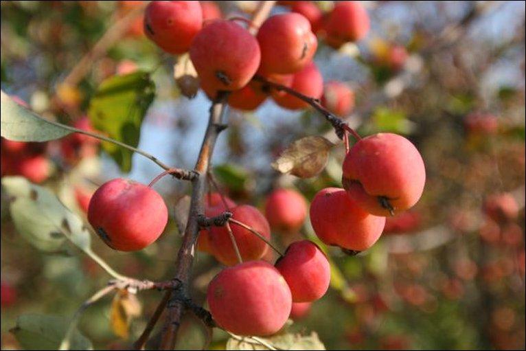 [apples.jpg]